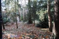 Деревья в Гурзуфе._2