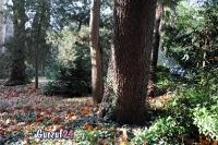Деревья в Гурзуфе._3