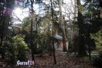 Деревья в Гурзуфе._8