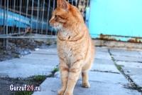 В Гурзуфе коты - ещё одна достопримечательность_10