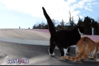 В Гурзуфе коты - ещё одна достопримечательность_11