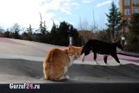 В Гурзуфе коты - ещё одна достопримечательность_12