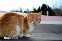 В Гурзуфе коты - ещё одна достопримечательность_13