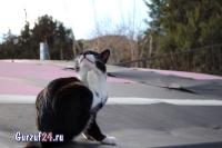 В Гурзуфе коты - ещё одна достопримечательность_14