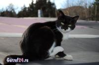 В Гурзуфе коты - ещё одна достопримечательность_15