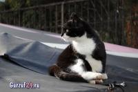 В Гурзуфе коты - ещё одна достопримечательность_1