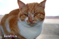 В Гурзуфе коты - ещё одна достопримечательность_3