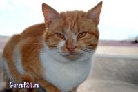 В Гурзуфе коты - ещё одна достопримечательность_4