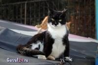 В Гурзуфе коты - ещё одна достопримечательность_6