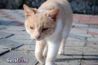В Гурзуфе коты - ещё одна достопримечательность_7