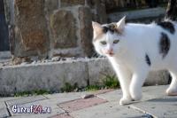 В Гурзуфе коты - ещё одна достопримечательность_8